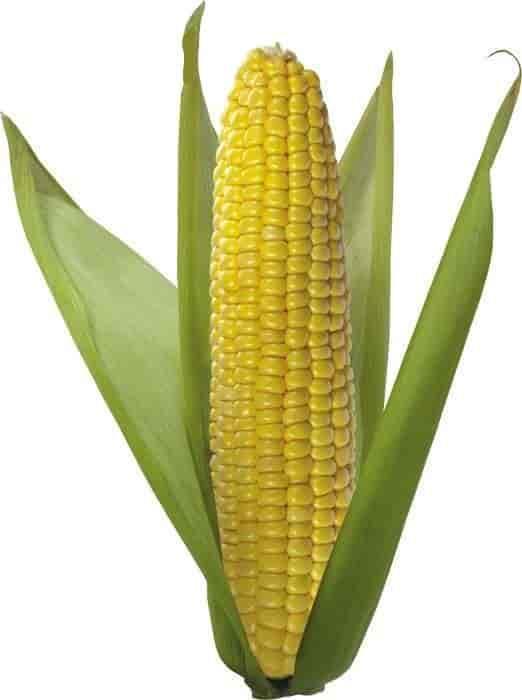 Купить Семена кукурузы Нериса
