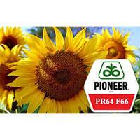 Семена подсолнечника ПP64Ф66 (Пионер)