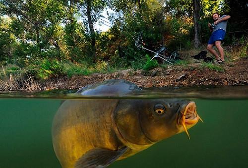 Рыболовные наборы на мирную рыбу