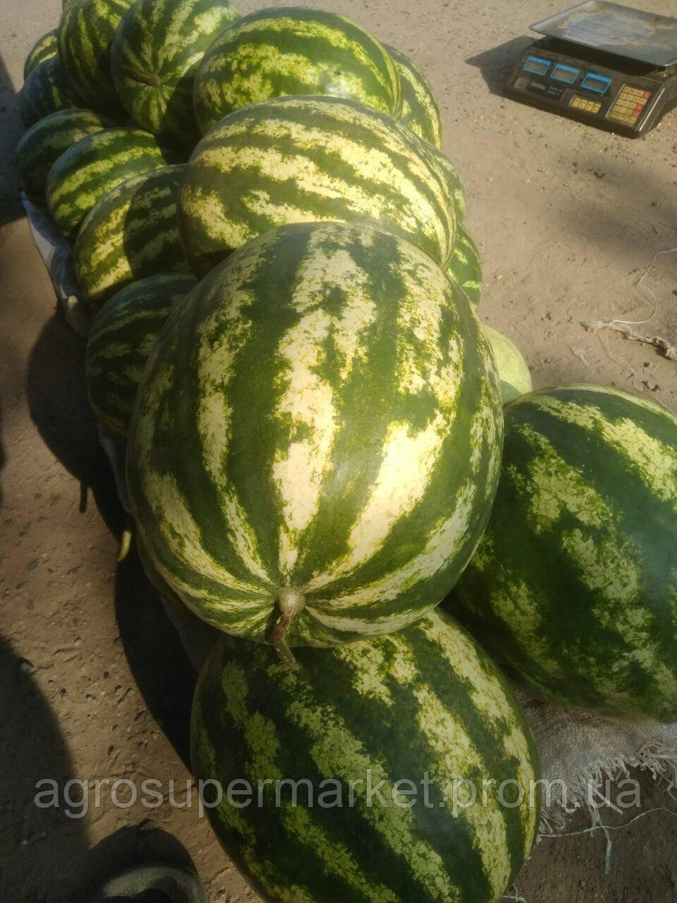 ПРОДЮСЕР/ Галактика семена арбуза банка 0.5кг (Турция Оригинал бт-сид), фото 1