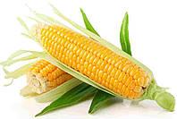Купить Семена кукурузы СИ Батанга