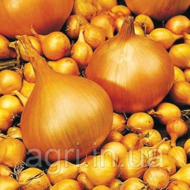 Цибуля озима Сеншуй, 1 кг. Голандія