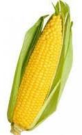 Купить  Семена кукурузы P8816