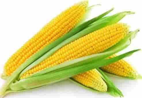 Купить Семена кукурузы P9911