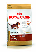 Royal Canin Dachshund Junior 1,5 кг для щенков таксы