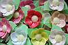 Вафельные цветы «Кувшинки на трилистнике микс»