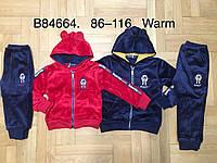 Велюровый утепленный костюм 2 в 1 для мальчика оптом, Grace, 86-116 см,  № B84664, фото 1