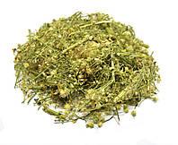 Мелколепестник канадский трава (ЗАТКНИ ГУЗНО)