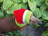 Кавун Шапка для собаки,шапка для такси,одяг для домашніх тварин, фото 2