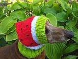 Кавун Шапка для собаки,шапка для такси,одяг для домашніх тварин, фото 3