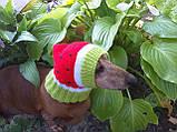 Кавун Шапка для собаки,шапка для такси,одяг для домашніх тварин, фото 4