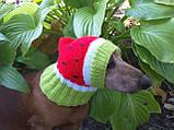 Кавун Шапка для собаки,шапка для такси,одяг для домашніх тварин, фото 6