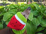Кавун Шапка для собаки,шапка для такси,одяг для домашніх тварин, фото 7