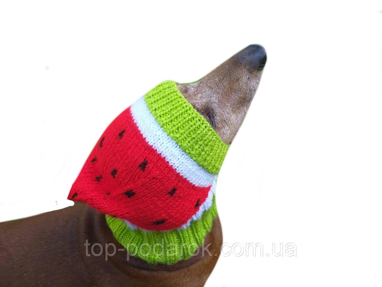 Кавун Шапка для собаки,шапка для такси,одяг для домашніх тварин