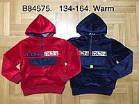 Утепленная велюровая толстовка для мальчиков оптом, Grace, 134-164 см,  № B84575, фото 1