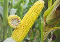 Купить Семена кукурузы ДН Аджамка