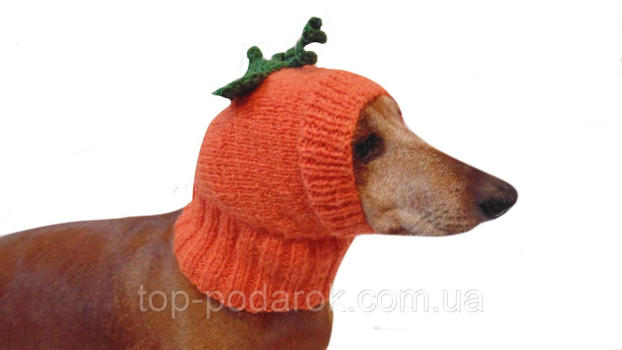 Шапка для собаки тыква