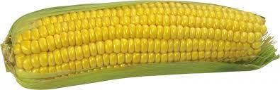 Купить Семена кукурузы ЕС Бомбастик