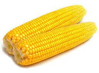 Купить Семена кукурузы ЕС Метод