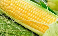 Купить Семена кукурузы Исбери КС