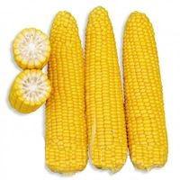 Купить Семена кукурузы Сканди КС