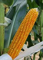Купить Семена кукурузы Маs/Мас 18.T