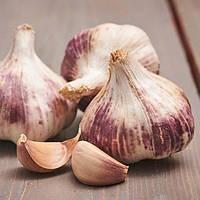 Чеснок Germidour (озимый) (луковицы) , купить