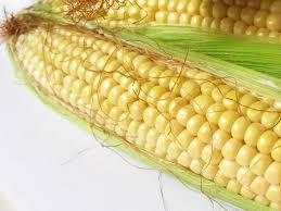 Купить Семена кукурузы Маs/Мас 37.V