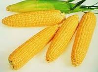 Купить Семена кукурузы Маs/Мас 44.А