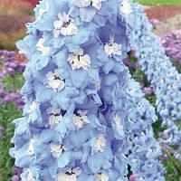 Дельфиниум Sky Blue White Bee (саженцы) , купить