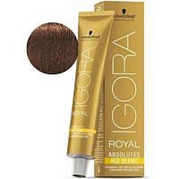 Стойкая краска для седых волос SCHWARZKOPF Igora Royal Absolutes 60 мл 6-460 Темный русый бежевый шоколадный
