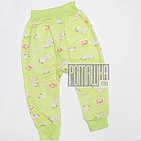 Штанишки на широкой резинке цветные с начесом р. 62 ткань ФУТЕР 100% хлопок ТМ Авекс 1107 Зеленый