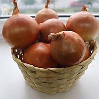 Семена лука озимого CRX 2301 F1 250 000 сем., Cora Seeds