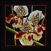 """Набор д/вышивания РТО """"Орхидеи """"Пафиопедилум"""" (""""Венерин башмачёк"""") """""""
