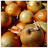 Семена лука озимого CRX 2554 F1 250 000 сем., Cora Seeds