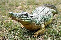 Крокодил (М), фото 1
