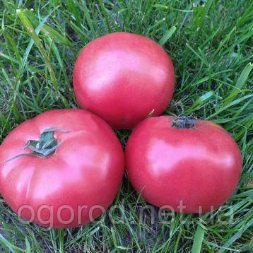 Пінк Кристал F1 10 шт насіння томату високорослого рожевого Clause, Франція