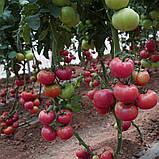 Пінк Кристал F1 10 шт насіння томату високорослого рожевого Clause, Франція, фото 2
