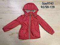 Ветровка на флисе для девочек оптом, Glo-story, 92/98-128 рр., арт. GPY-9743, фото 1