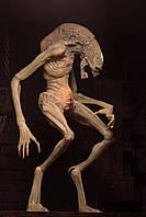 NECA Newborn Alien: Resurrection, Новонароджений Чужий, Чужой: Воскрешение Новорожденный, фото 1