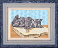 Схема для вышивки бисером - Игривый котенок, Арт. ЖБ3-007-2-R - Распродажа