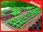 Garden Pest мощнейшее средство против сорняков, фото 4