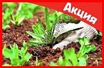 Garden Pest мощнейшее средство против сорняков, фото 9
