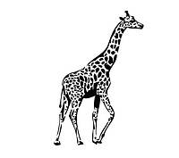 Стикер в детскую комнату Red Love giraffe 50х75 см Черный