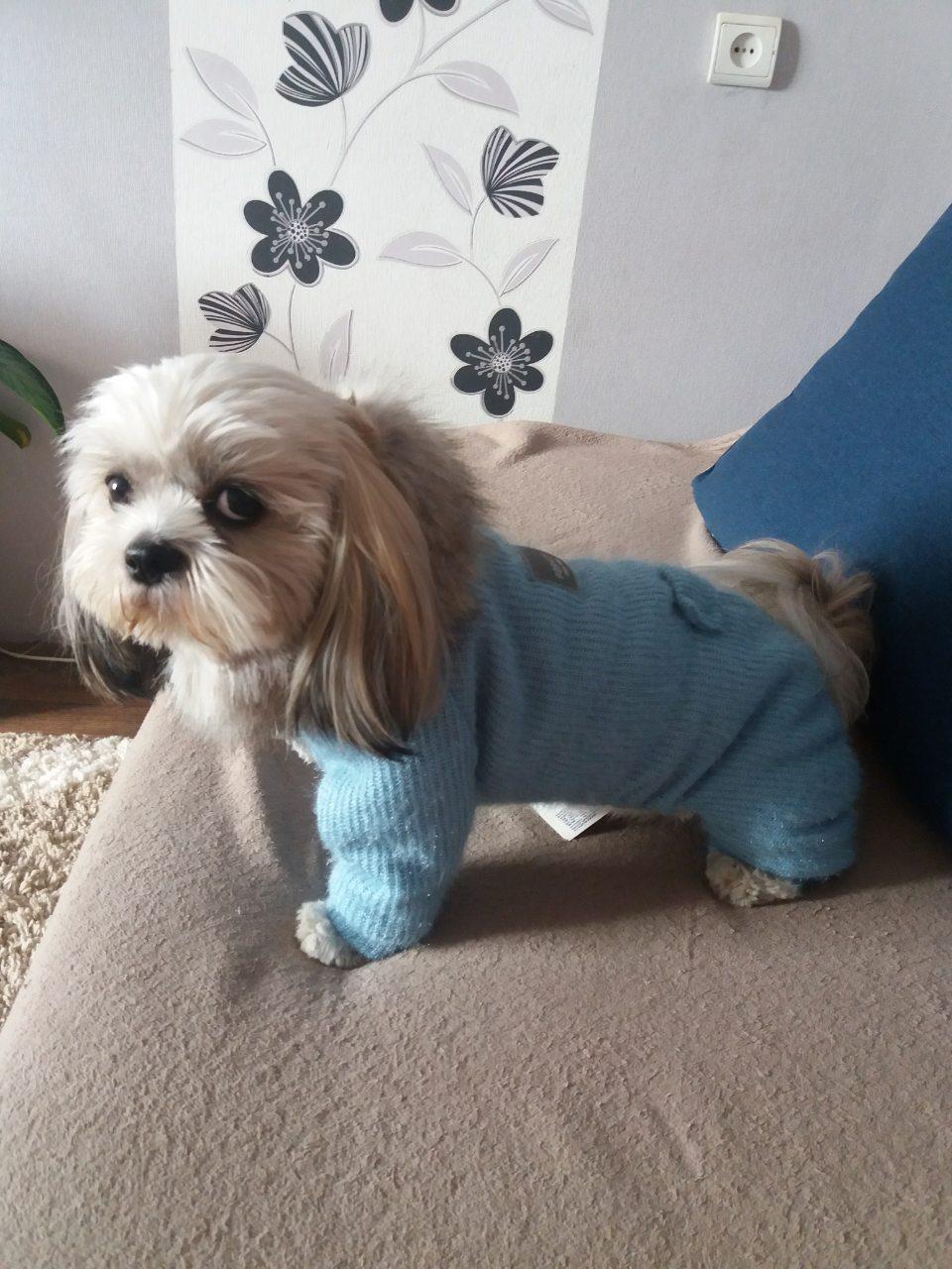 Комбинезон для собаки Pet Fashion Шанти M, Длина спины 33-36, обхват груди 41-48 см