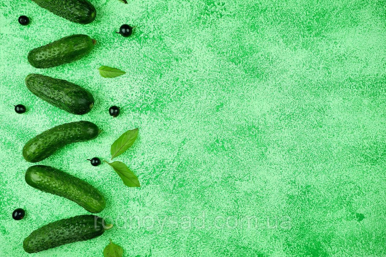 Зеленый двусторонний, матовый студийный фон для товара 50х40. Фотозона