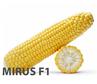 Семена кукурузы сахарной Mirus F1 5000 сем. Royal Sluis, Seminis