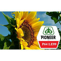 Насіння соняшнику П64ЛЕ99 (Піонер)