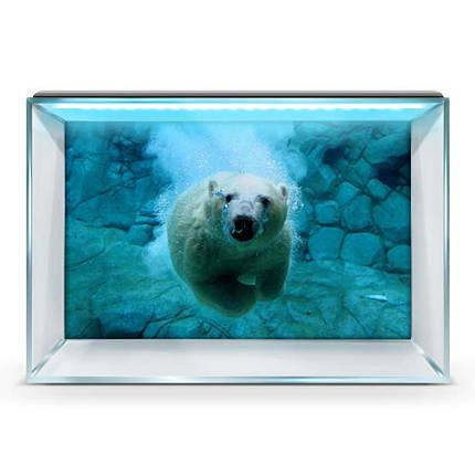 Наклейка с рыбами и морской флорой для аквариума 40х65 см., фото 2