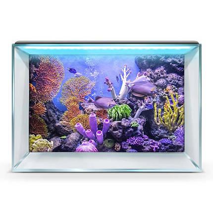 Подводный мир в аквариум наклейка, в разных размерах 40х65 см., фото 2